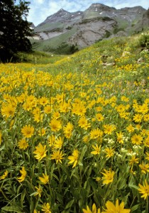Crested Butte Bike Week & Wildflower Rush
