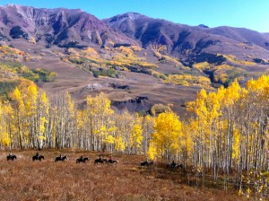 Crested Butte Prettiest Place