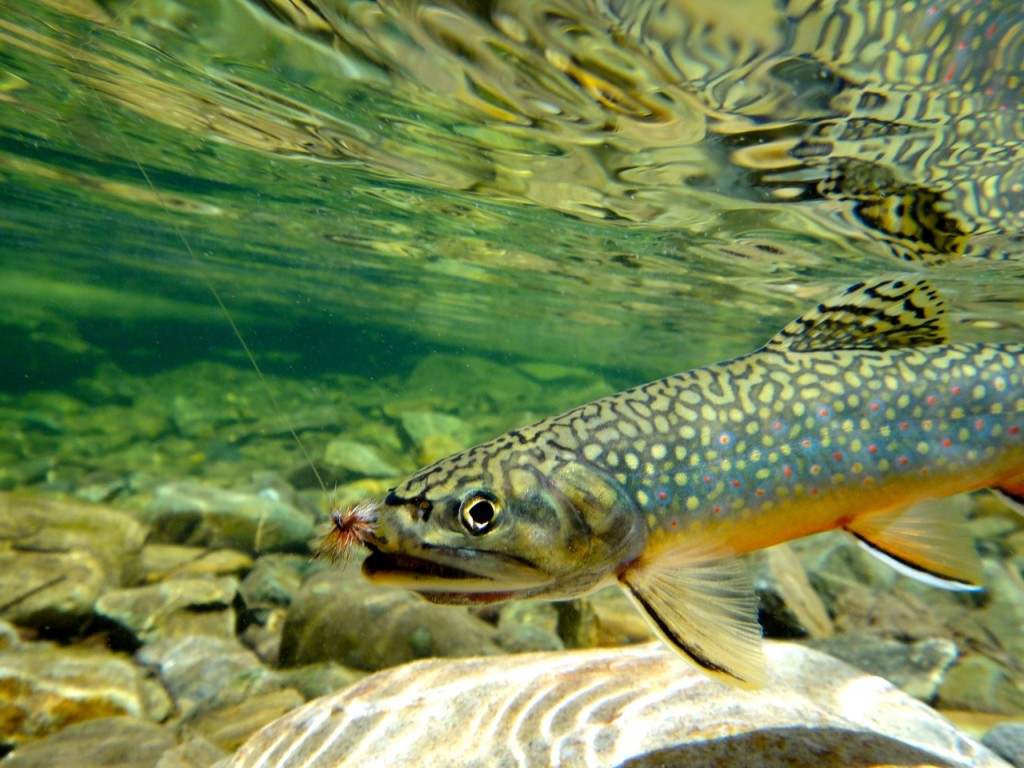 Fly fishing in the crested butte area for Crested butte fishing