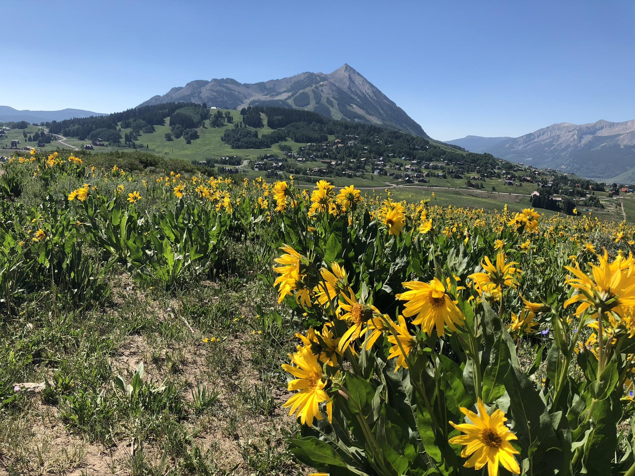 Will My Crested Butte Home Sell?